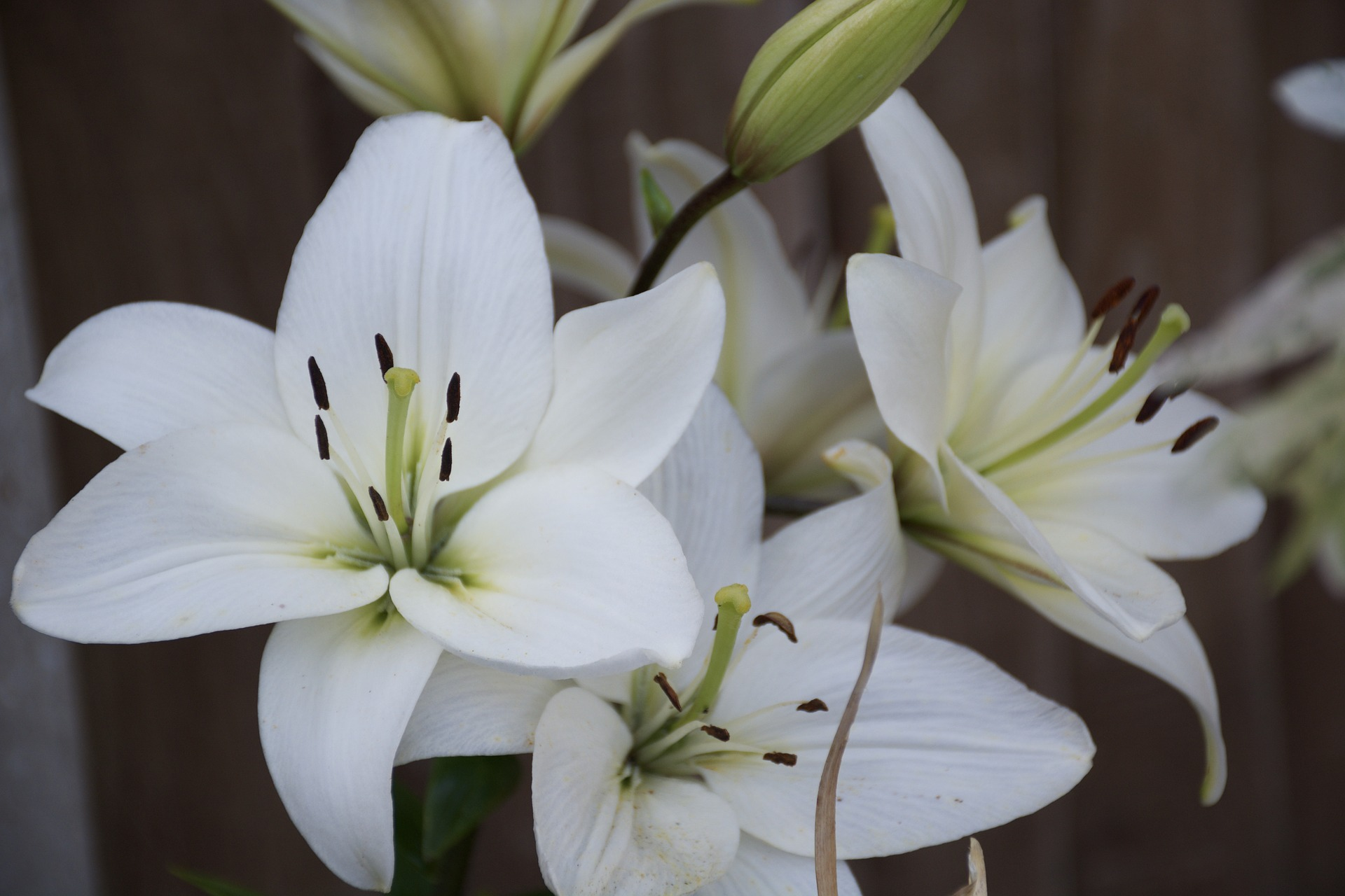 Guest blog post how funeral directors can use the language of most families love the fresh and classic feel of a lily and their gorgeous fragrance can add another level of elegance to the service izmirmasajfo Images